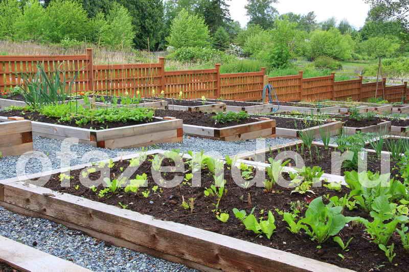 Контейнерный огород своими руками: советы садоводам