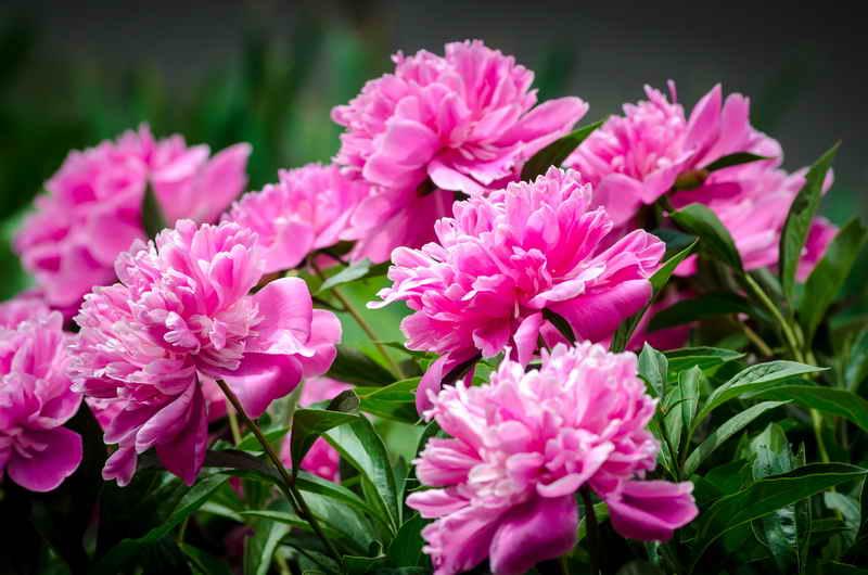 Какие цветы можно и нужно сажать осенью на даче
