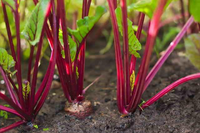 Место в саду кулинарным травам и овощам: советы садоводам