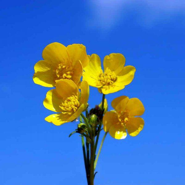 Десять наикрасивейших, но опасных цветов
