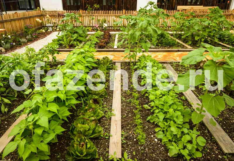 Аптечные средства, которыми можно защищать сад и огород