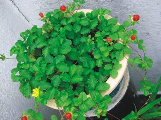 Стелющиеся травянистые растения в вашем саду: советы садоводам