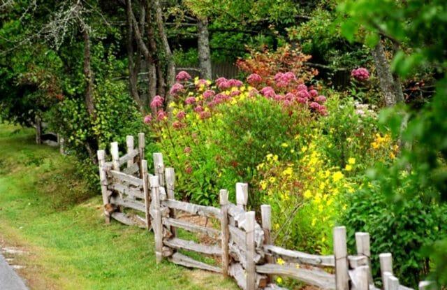 Деревенский сад : польза и красота без особых хлопот