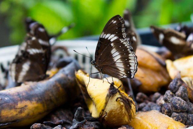 Удобрение из банановых шкурок: 6 необычных способов их применения в огороде