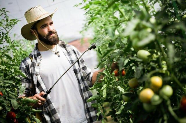 Чем и когда нужно опрыскивать томаты, чтобы сберечь и повысить урожай