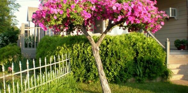 Новая жизнь старых деревьев: советы садоводам