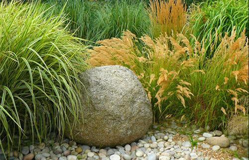 Декоративные злаки в вашем саду: советы садоводам