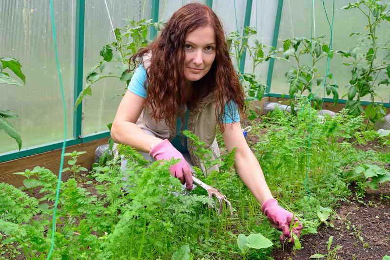 3 культуры для выращивания зимой в теплице