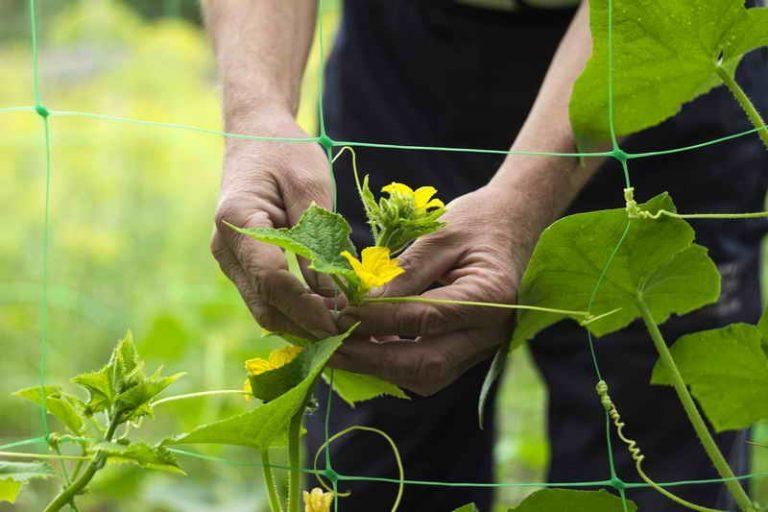 Как повысить урожайность огурцов: 10 полезных советов