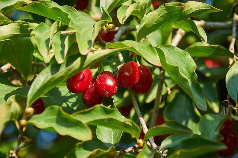 Живые изгороди из неприхотливых растений в Вашем саду: советы садоводам