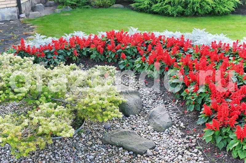 Цветник среди камней: советы садоводам