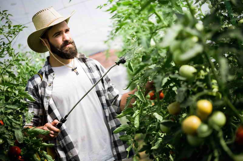 Каких удобрений не хватает томатам?