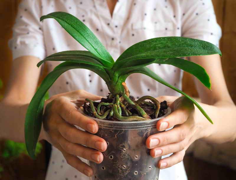 Все, что нужно знать о цветении орхидей