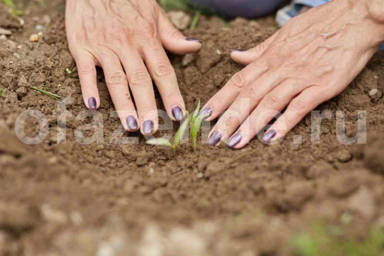 Как вырастить рассаду перца из семян в домашних условиях, пошаговая инструкция