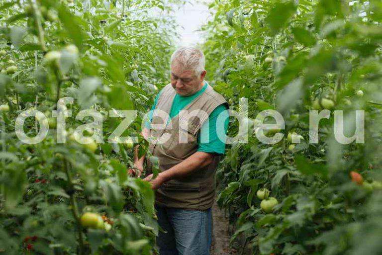 Чтобы томатов было больше, чем зелени на них