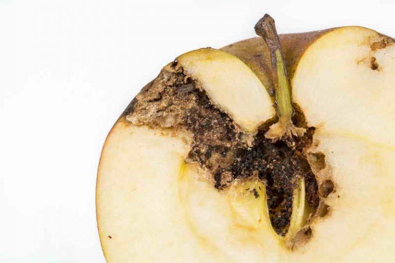 Как защитить яблоню от огнёвки и плодожорки