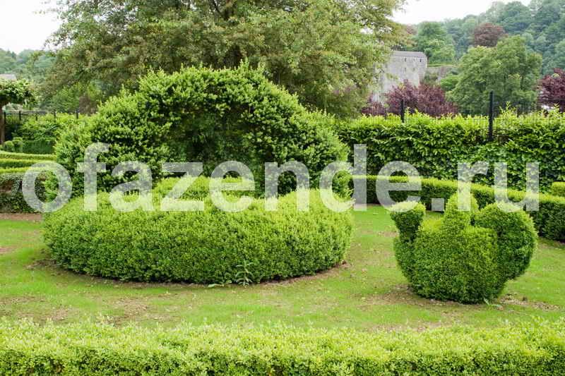 Живописная группа кустарников: советы садоводам
