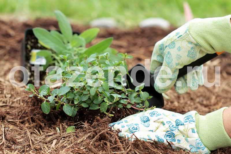 Мульча против сорняков: советы садоводам