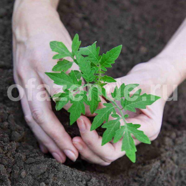 Определяем состав почвы на участке