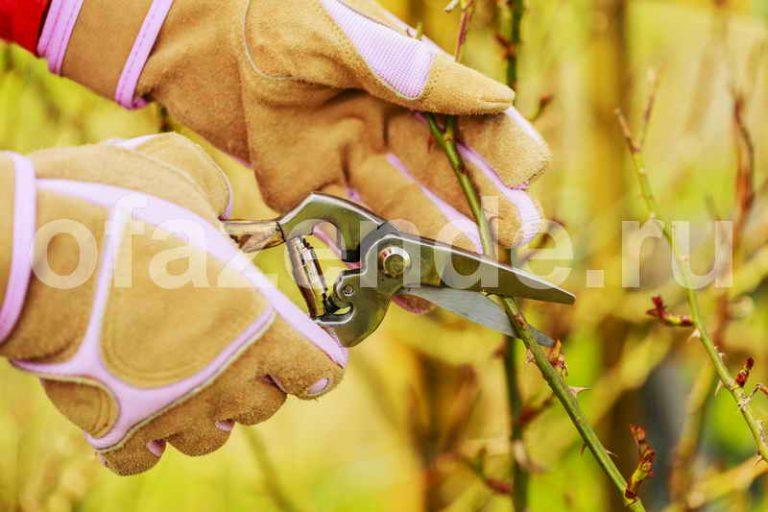Розы в буррито – простой и надёжный метод размножения черенками
