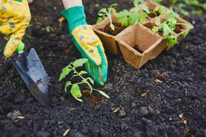 Как закалить рассаду перед высадкой – советы дачникам