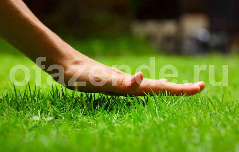 4 секрета красивого и ухоженного газона на вашем участке
