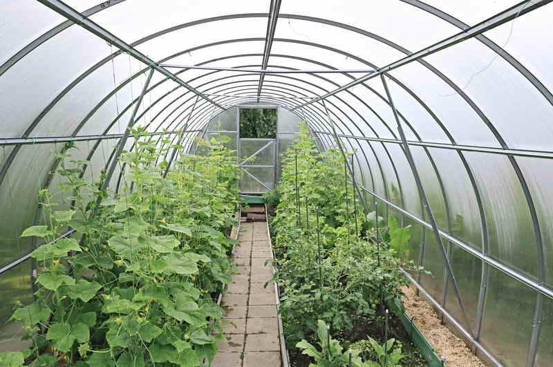 Урожай под пленкой и стеклом: советы садоводам
