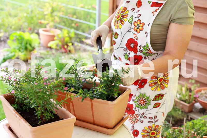 Пересадка контейнерных растений своими руками: советы садоводам