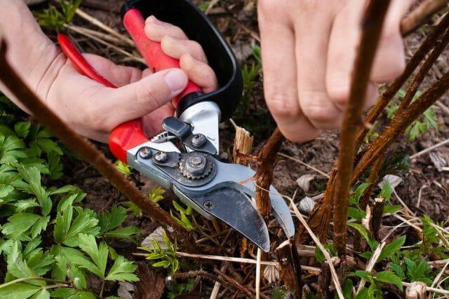 Особенности санитарной обрезки сада