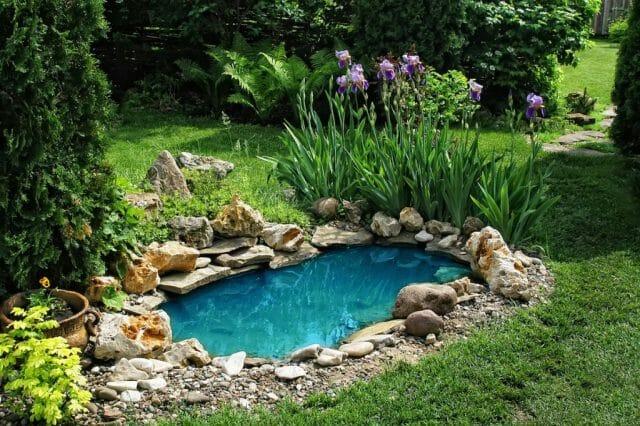 Декоративный пруд: установка, выбор растений - советы садоводам