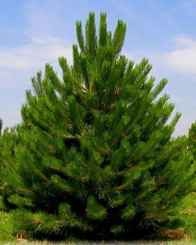 Неприхотливые деревья в Вашем саду: советы садоводам