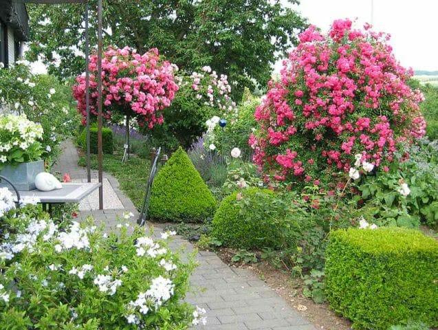 Штамбовые украшения сада: советы садоводам
