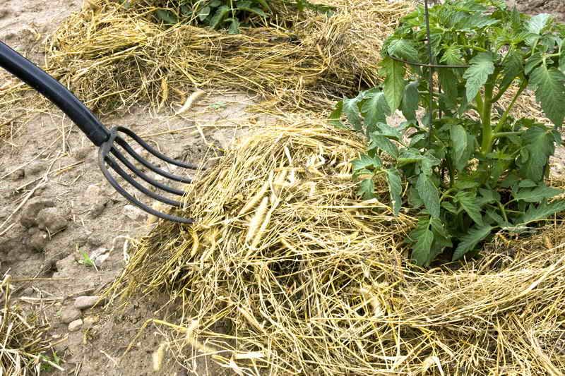 Трава - в дело. Удобрение из травы