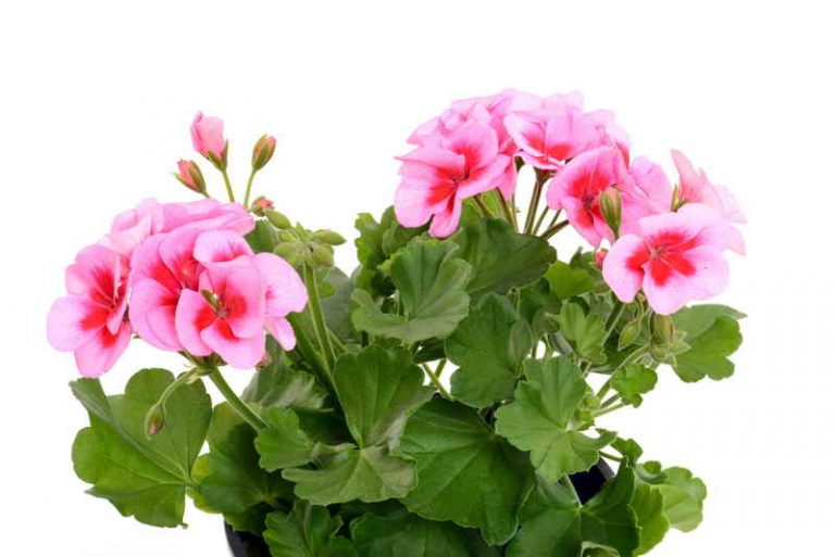 4 комнатных растения, которые должны быть в каждом доме