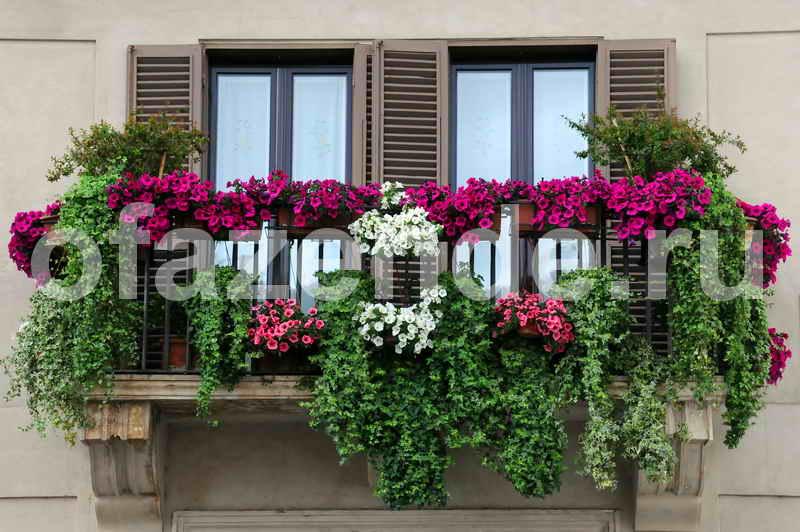 Цветник на балконе своими руками: советы садоводам