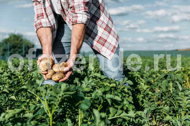 Болезни картофеля при его хранении