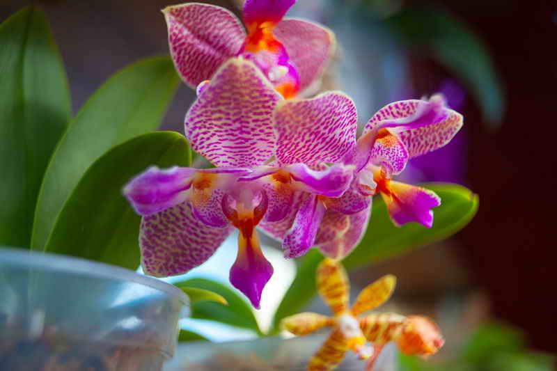 Почему не цветёт орхидея
