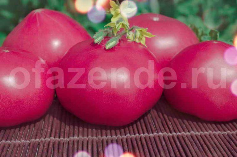 Какие розовые томаты имеют высокую урожайность?