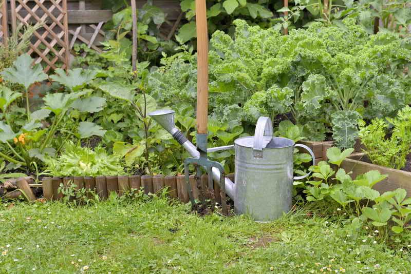 Ранний урожай кабачков