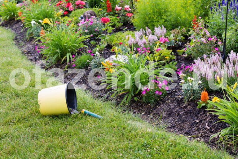 Май наступил а значит пришло время поговорить о том чем можно пополнить свой сад