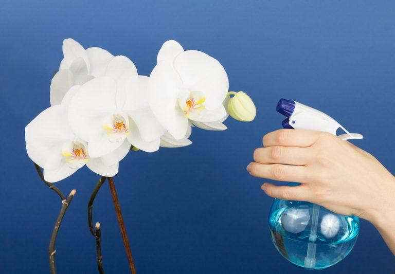Чесночная подкормка для орхидей
