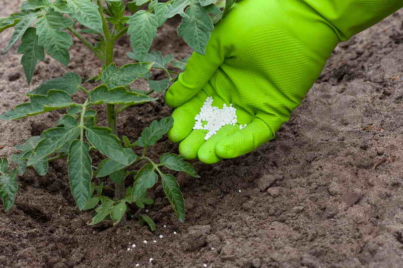 Применение калийных удобрений на участке