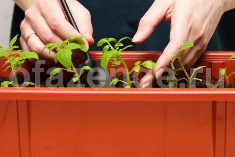 Секреты выращивания томатов от опытных огородников