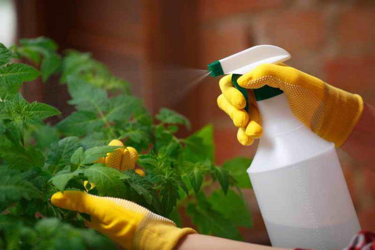 Применение медного купороса в саду