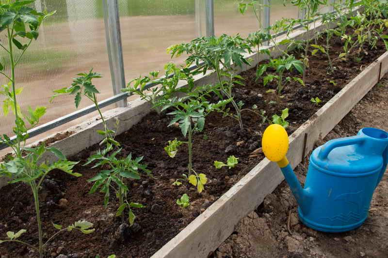 Как подкармливать дрожжами клубнику, помидоры, огурцы и зачем вообще это делать?