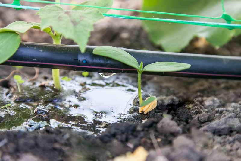Отличная идея для выращивания огурцов