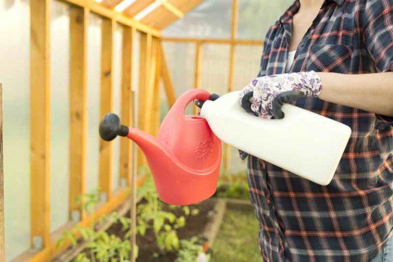 Правильный полив, подкормка и уход за помидорами