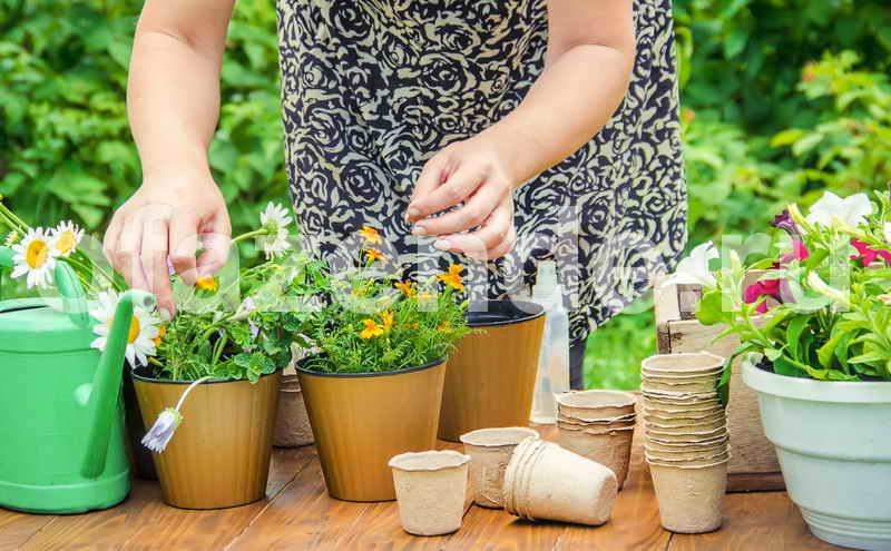 Подкормка и уход за домашними растениями