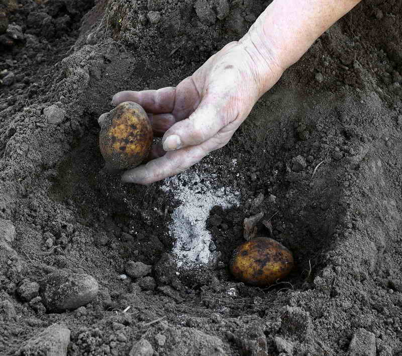 Необходимая обработка сада после сбора урожая