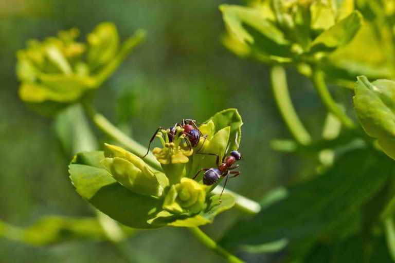 Избавляемся от муравьев: 14 способов